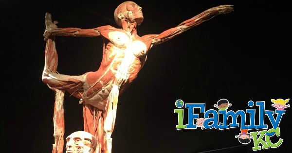 Body Worlds The Cycle of Life