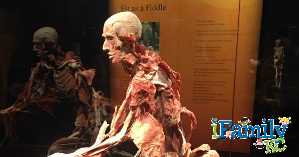Body Worlds at Union Station