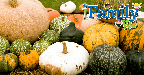 Fall Fun: Pumpkin Patches YOU Need To Visit This Autumn!