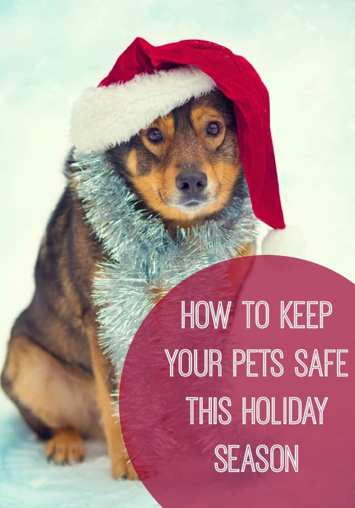 4 Tips to Keep Your Pets Safe this Holiday Season // iFamilyKC