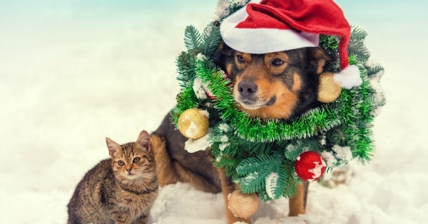 4 Ways to Keep Your Pets Safe this Holiday Season